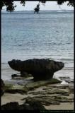 LHI -  rock formations near settlement beach