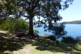 Warumbul picnic  area Royal National Park