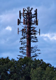 Cell Phone Tower in disguise.