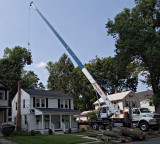 Removing a tree #1
