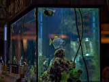 Fish tank in the bar