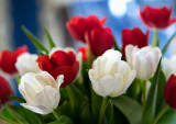 A bouquet of tulips.