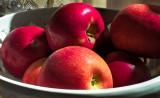 Apples in morning sunlight
