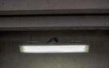 Pigeon on a light fixture