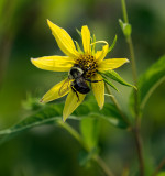 Busy Bee #1 0f 2
