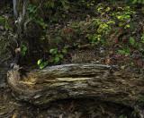 Button Bush Trail