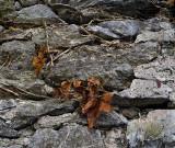 Dead leaves on rocks