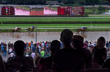 At the horse races