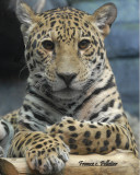 : Zoo de Granby hiver 2014 :
