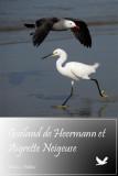 : Oiseaux du Mexique :