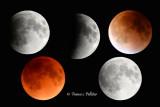 :: Super Lune de Sang ::