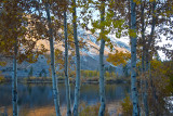 Sunset Aspen