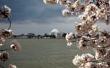 Jefferson Memorial - Springtime