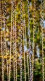 2014-032 Chains