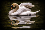 2014-034 Swan