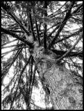2014-051 NaturalCrossLinking