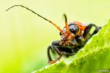 2014-61 Bug