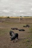 Irvings Farm