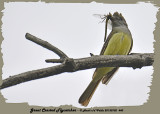 20130702 440 Great Crested Flycatcher HP.jpg