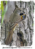 20130702 315 Great Crested Flycatcher.jpg