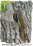 20130702 459 SERIES - Great Crested Flycatcher.jpg