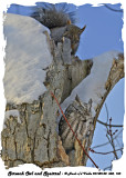 20140130 388 113 Screech Owl and Squirrel.jpg