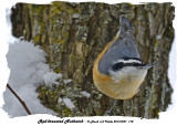 20131227 178 Red-breasted Nuthatch.jpg