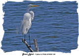20140323 060 Great Egret.jpg
