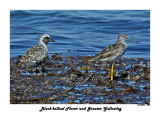 20140822 1494 Black-bellied Plover and Greater Yellowleg.jpg