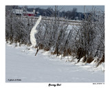 20150106 113 Snowy Owl.jpg