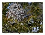 20150211 328 Barred Owl.jpg