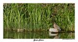 20150224 DR 1209 Green Heron.jpg