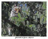 20150319 - 2 163 Barred Owl and Lunch a Chipmunk.jpg