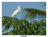 20150224 DR 1412 Snowy Egret.jpg