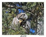 20150319 050 Barred Owl.jpg