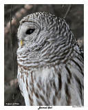 20150320 117 Barred Owl.jpg