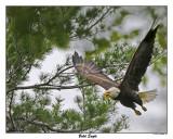 20150521 108 Bald Eagle.jpg