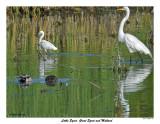 20150624 066 Little Egret, Great Egret and Mallards.jpg