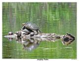 20150702 763 SERIES - Snapping Turtles.jpg