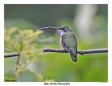 20150724 339 Ruby-throated Hummingbird.jpg