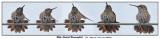 20150811 057 - 062 SERIES - Ruby-throated Hummingbird.jpg