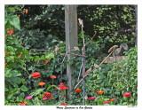 20150823 031 House Sparrows in Our Garden.jpg