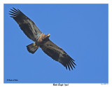 20150918 014 SERIES - Bald Eagle and Osprey (juv).jpg