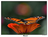 20150911-2 118 Monarch.jpg
