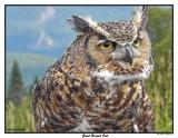 20150830 149 Great Horned Owl.jpg