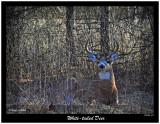 20151226 003 White-tailed Deer.jpg
