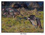 20151226 056 SERIES - Wild Turkeys.jpg