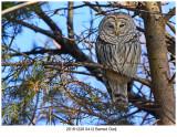 20161228 0412 Barred Owl.jpg