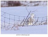20170111 2760 Snowy Owl.jpg