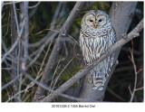 20161228-2 1055 Barred Owl.jpg